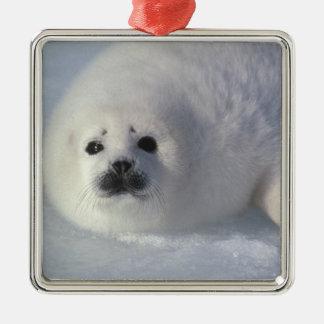 Arpa de una semana del groenlandica del Phoca de Adorno De Navidad