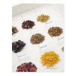 Arranged herbs postcard
