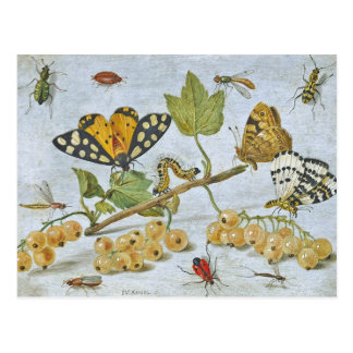 Arrastre de los insectos tarjeta postal