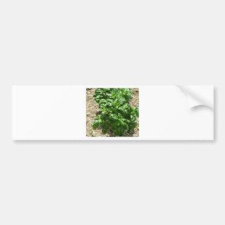 Array of basil plants bumper sticker