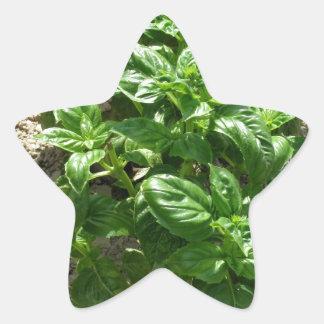 Array of basil plants star sticker