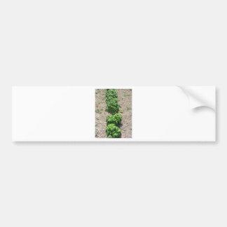 Array of basil varieties bumper sticker
