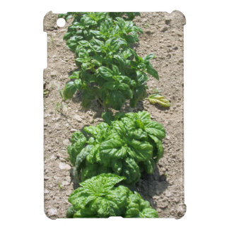 Array of basil varieties cover for the iPad mini