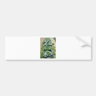 Array of cabbages bumper sticker
