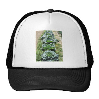 Array of cabbages trucker hat