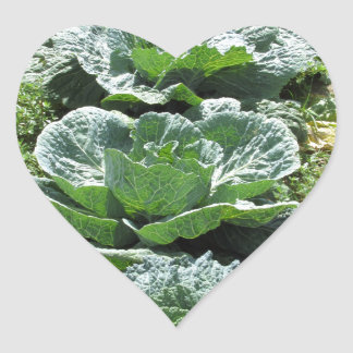 Array of cabbages heart sticker