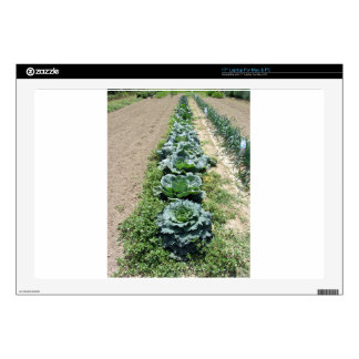 """Arrays of cabbages and onions 17"""" laptop skins"""