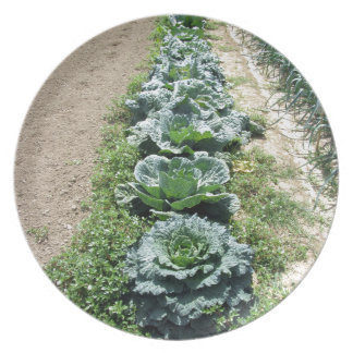 Arrays of cabbages and onions dinner plate