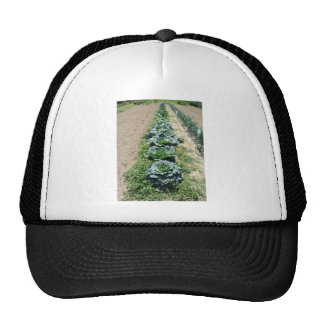 Arrays of cabbages and onions trucker hat