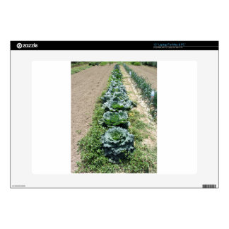 Arrays of cabbages and onions laptop skin