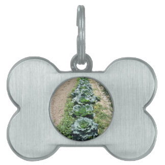Arrays of cabbages and onions pet ID tag