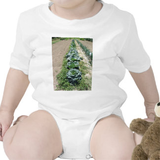 Arrays of cabbages and onions bodysuits