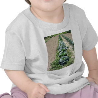 Arrays of cabbages and onions tshirts