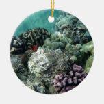 Arrecife de coral adorno de reyes