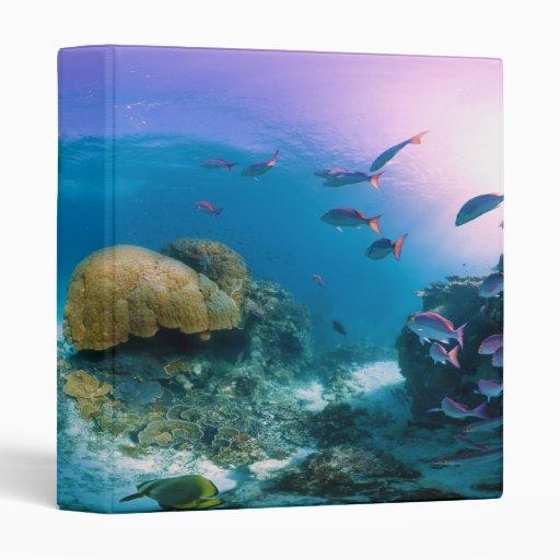 """Arrecife de coral cerca de la isla de la garza carpeta 1"""""""