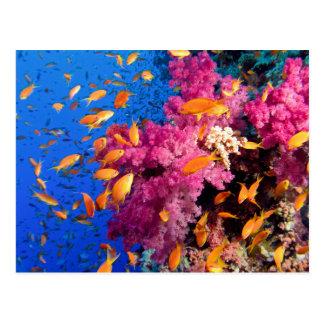 Arrecife de coral hermoso Naturescape Tarjetas Postales