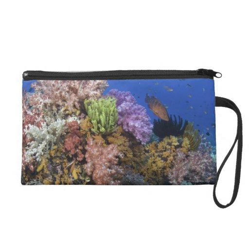 Arrecife de coral, opinión del uderwater