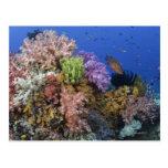 Arrecife de coral, opinión del uderwater tarjeta postal