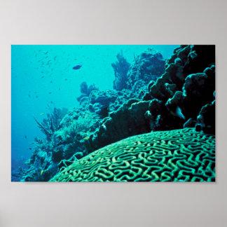 Arrecife de coral posters
