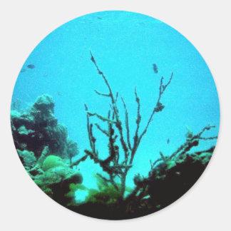 Arrecife de coral etiquetas redondas