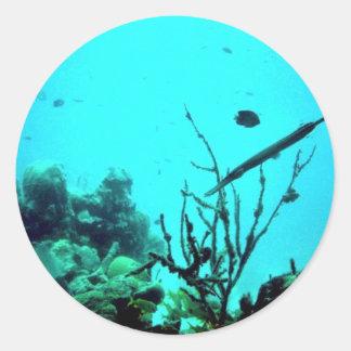 Arrecife de coral etiqueta redonda