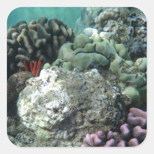 Arrecife de coral calcomanía cuadrada personalizada