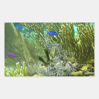 Arrecife de coral etiqueta