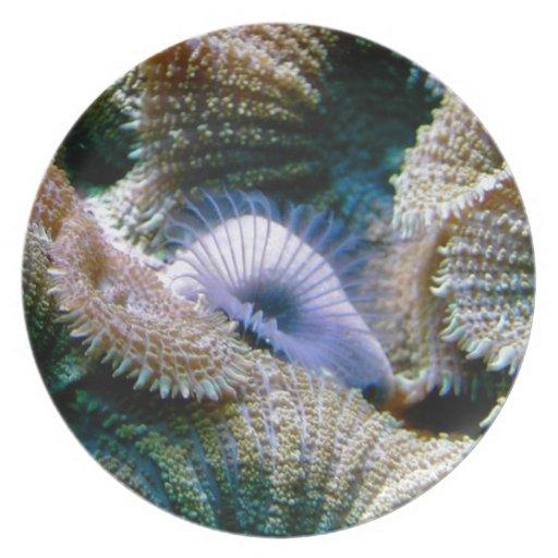 Arrecife de coral platos