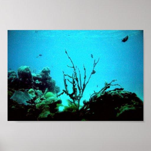 Arrecife de coral póster