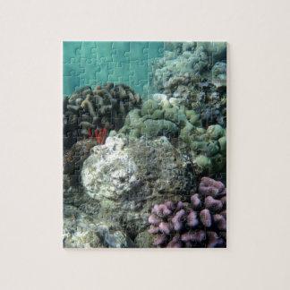 Arrecife de coral puzzle