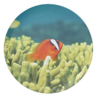 Arrecife de coral que vierte con los pescados plato de comida