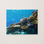 Arrecife de coral subacuático