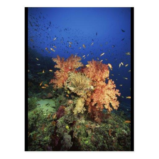 Arrecife de coral tarjeta postal