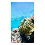 Arrecife de coral tarjetas de visita