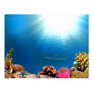 Arrecife de coral y tiburón postal