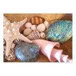 arreglo múltiple de la cáscara del mar del tarjetas de visita grandes