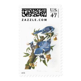 Arrendajo azul, bella arte de John James Audubon Sellos Postales