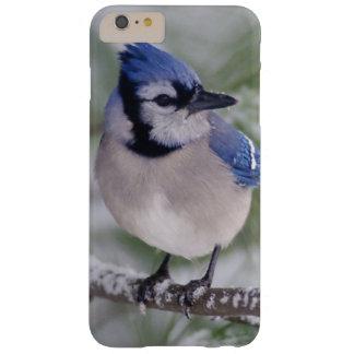 Arrendajo azul, cristata del Cyanocitta Funda Barely There iPhone 6 Plus