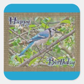 Arrendajo azul del feliz cumpleaños pegatina cuadrada