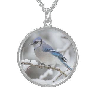 Arrendajo azul del invierno collar de plata de ley