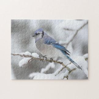 Arrendajo azul del invierno puzzles con fotos