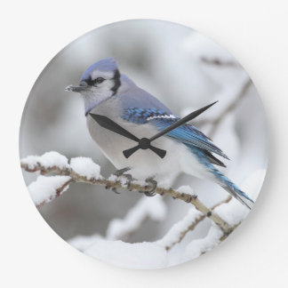 Arrendajo azul del invierno reloj redondo grande