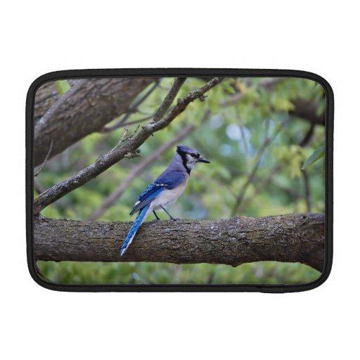 Arrendajo azul del verano fundas macbook air