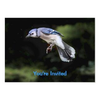 """Arrendajo azul del vuelo invitación 5"""" x 7"""""""