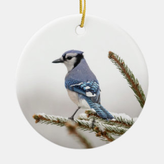 Arrendajo azul en invierno adorno navideño redondo de cerámica