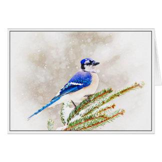 Arrendajo azul en invierno tarjeta de felicitación