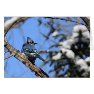 Arrendajo azul en nieve tarjeta de felicitación