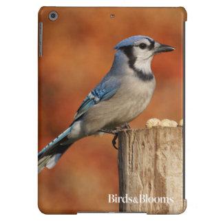 Arrendajo azul funda para iPad air