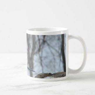 Arrendajo azul hambriento taza