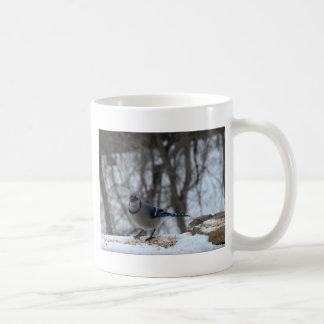Arrendajo azul hambriento taza clásica